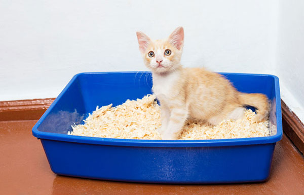 What is the best cat litter for kittens?