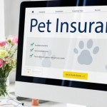 Best Value Pet Insurance for Cats & Dogs
