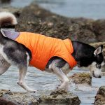 9 of the Best Waterproof Dog Coats