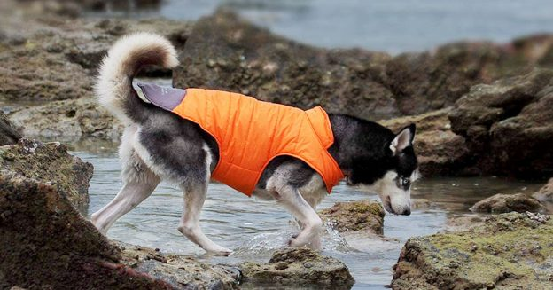 Best Waterproof Dog Raincoats