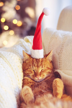Cat Relaxing at Christmas