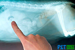 Cat X-ray