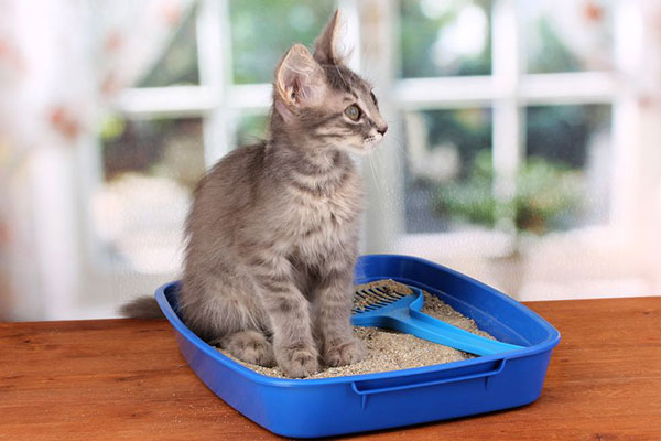 Why Use Cat Litter