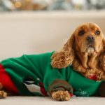 9 of the Best Christmas Jumpers for Dogs