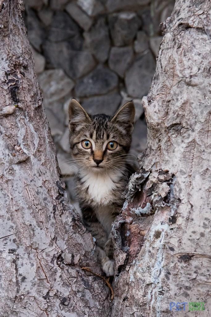Cute tabby kitten hiding in tree
