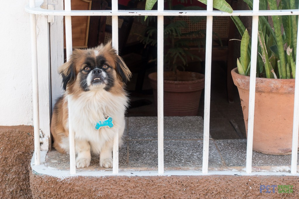 Paco the dog, sitting in a window
