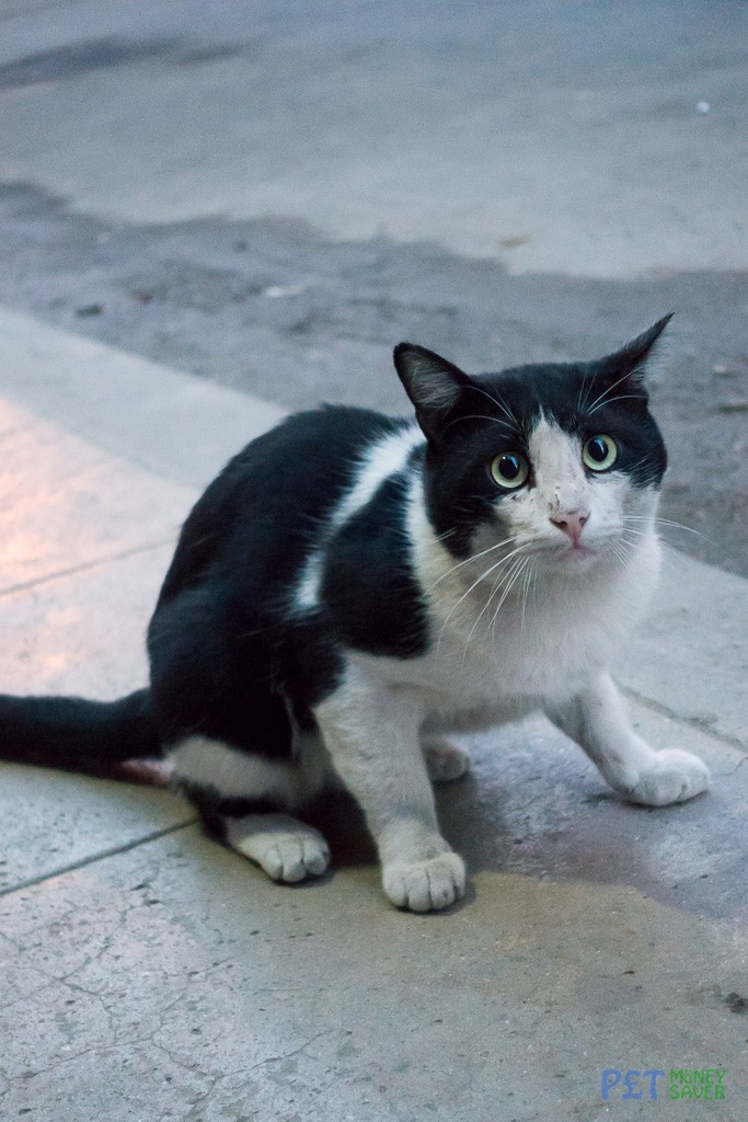A slightly surprised looking black and white cat