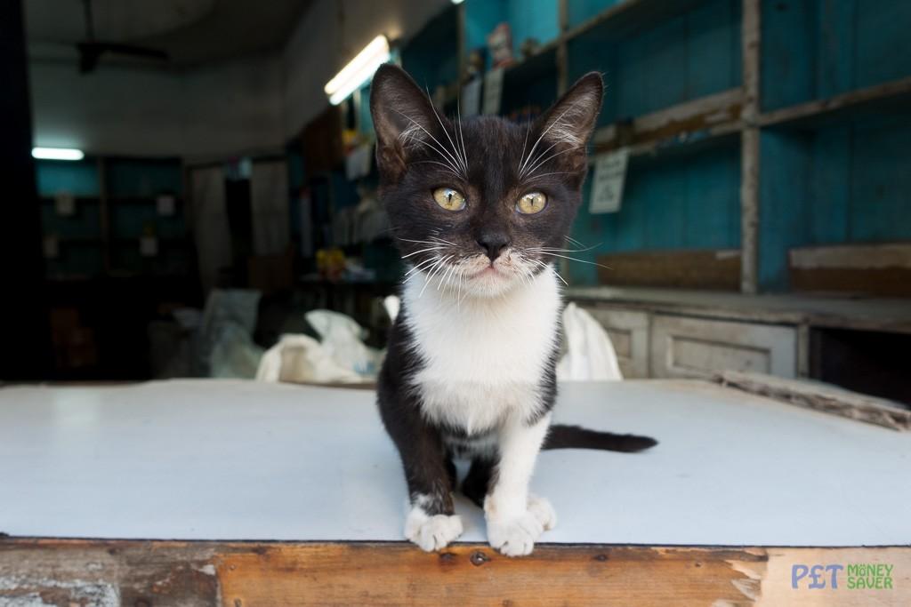Cute kitten greeting shop customers