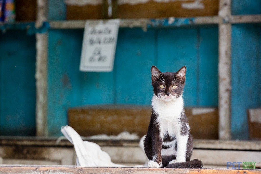 Shop-keeper kitten