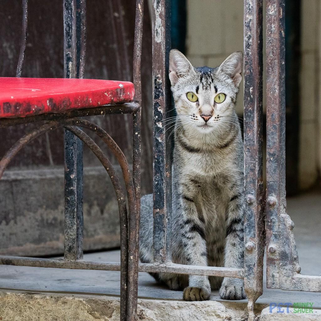 Grey tabby cat watching from doorway