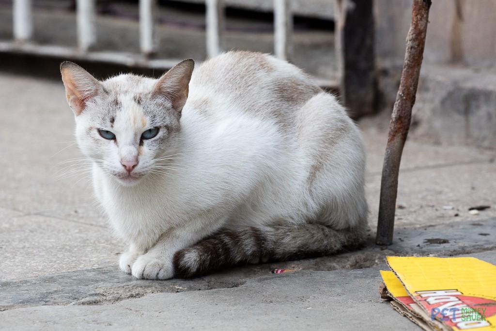 Relaxing on a Havana street