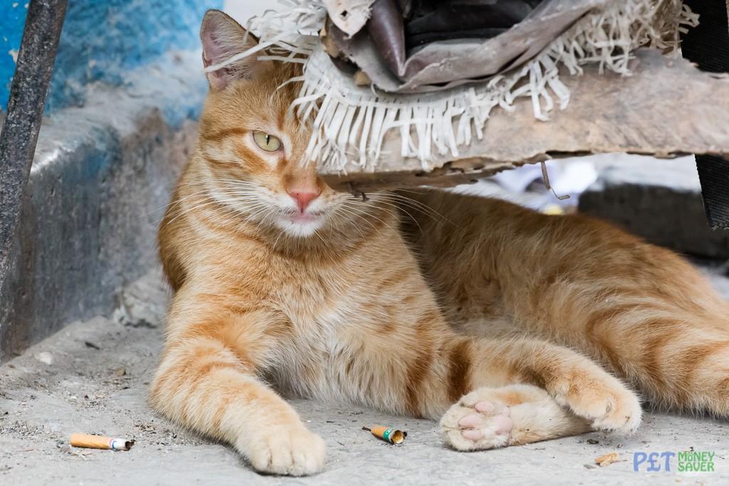 Ginger cat resting under a broken chair