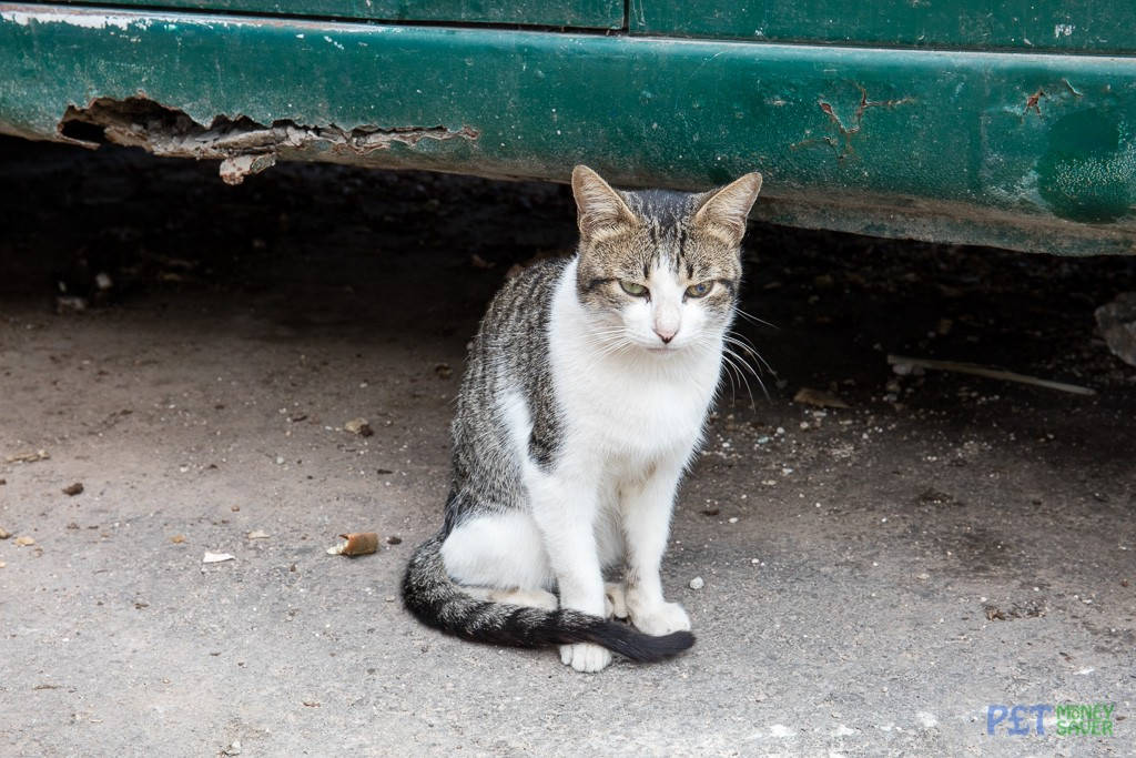 Another cat living in abandoned car