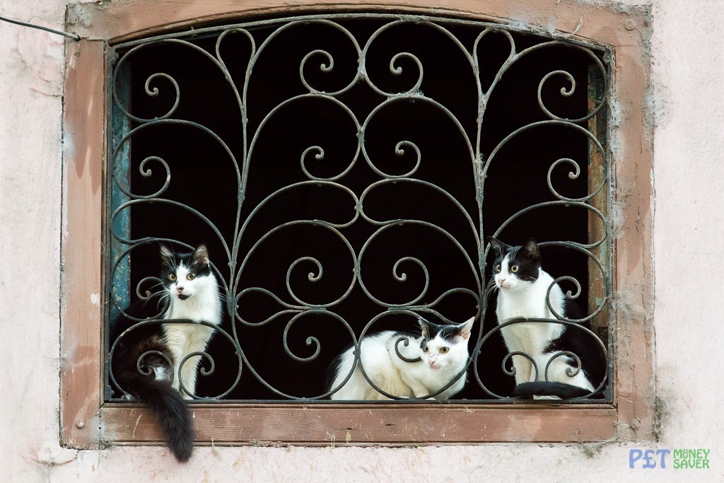 3 black and white cats sitting in a window