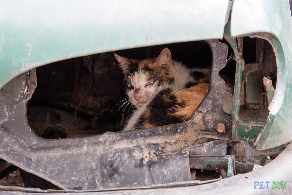 Sleepy cat resting inside abandoned car