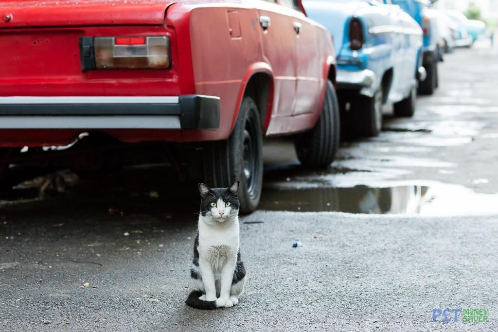 Black and white Cuban cat near Havana station