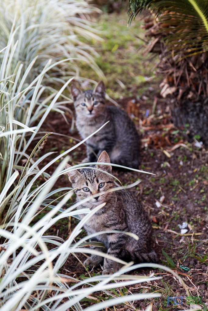 Two playful kittens in Vinales