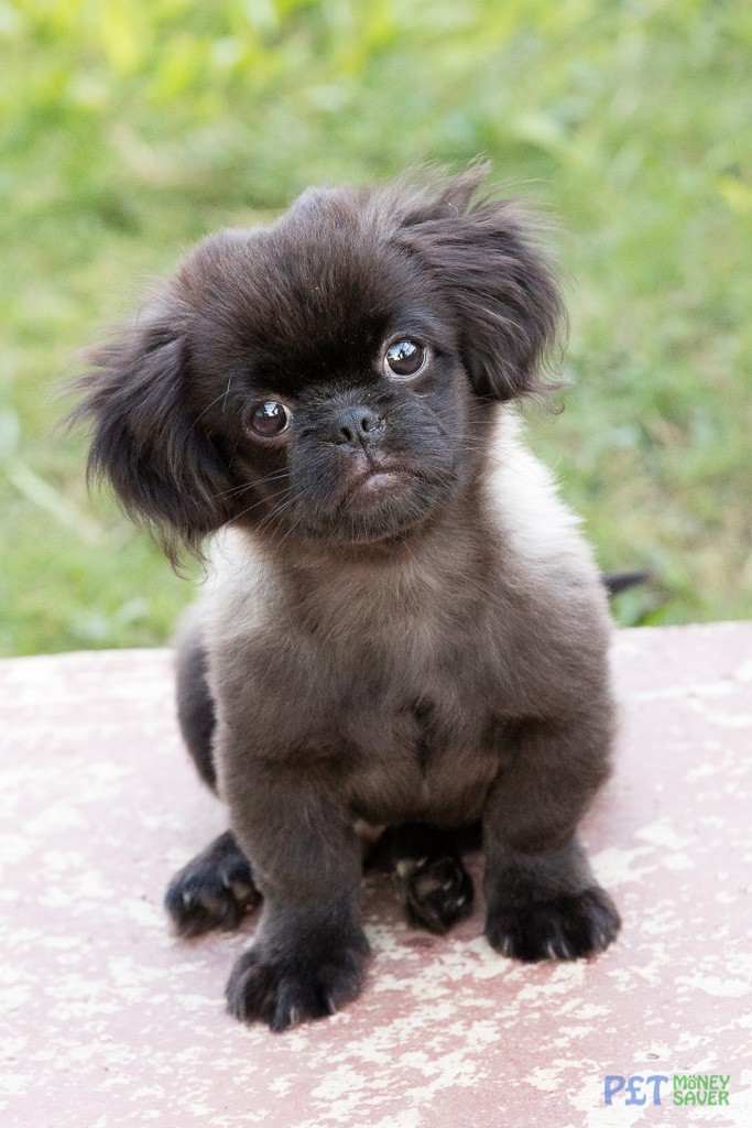 Small puppy looking very cute