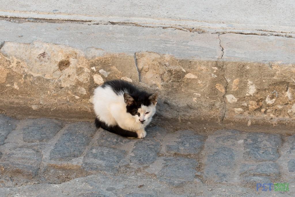Tiny kitten sheltering by the roadside