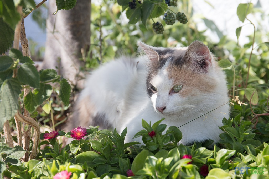 Snoozing cat in a garden in Megalachori