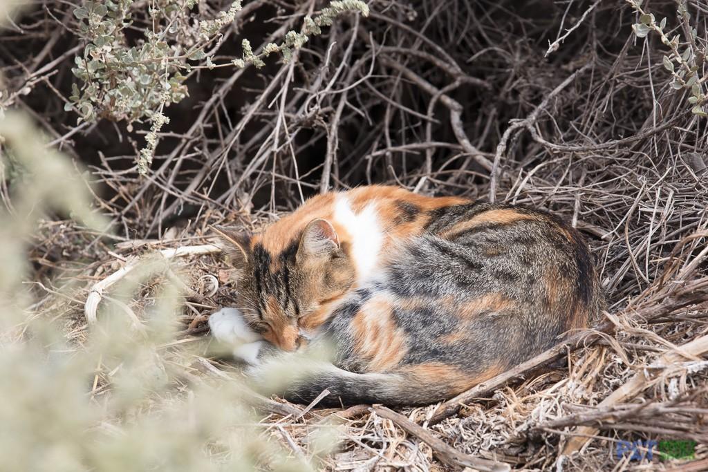 Black and orange cat sleeps in the undergrowth