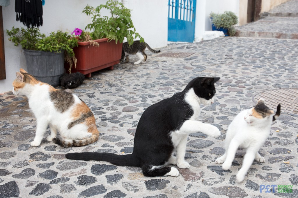 Two cats squabble at lunch time