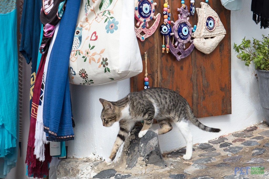 Tabby cat clambers over a small concrete post