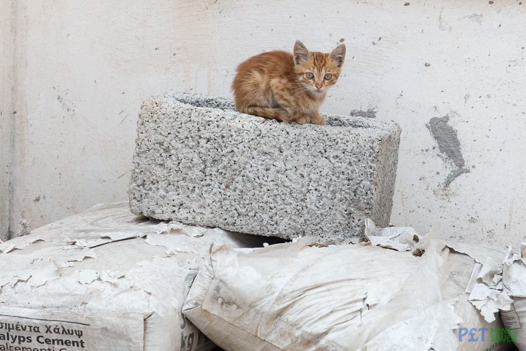Shy ginger kitten sits on a concrete block