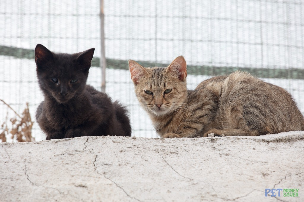 Two young cats sit and watch from a wall