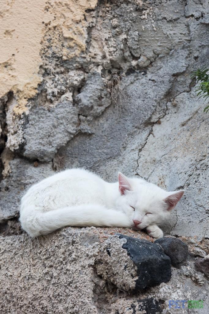 White cat sleeping on a concrete ledge
