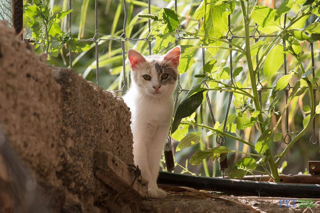 Shy cat sits by a garden