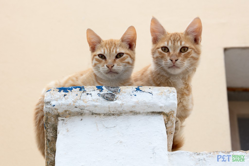 Two ginger kittens sitting on a wall