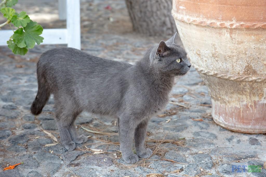 A dark grey cat stands next to a plant pot