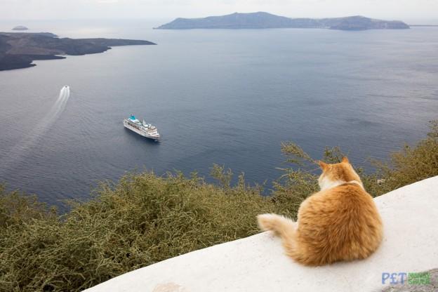 Cool Cats of Santorini