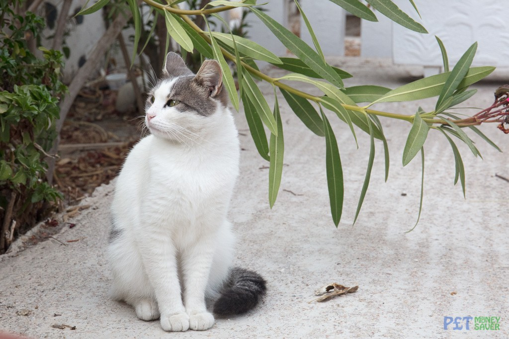 Looking at something in the garden