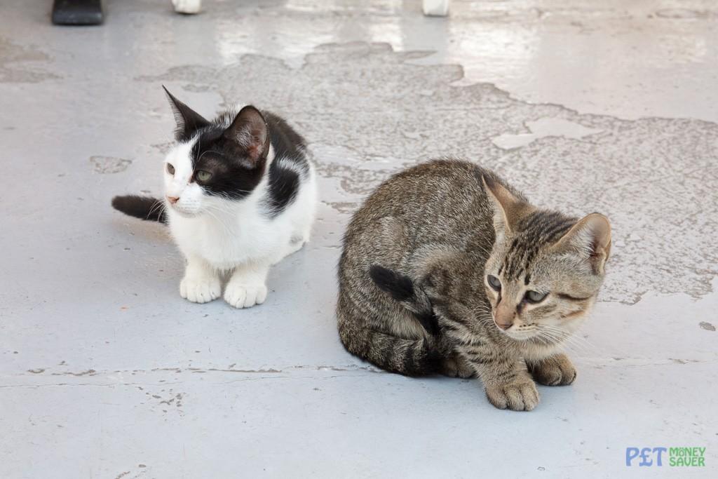 Two kittens sitting on a restaurant floor