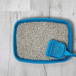 How to Dispose of Cat Litter Safely & Cleanly