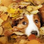 A Dog's Autumn Bucket List