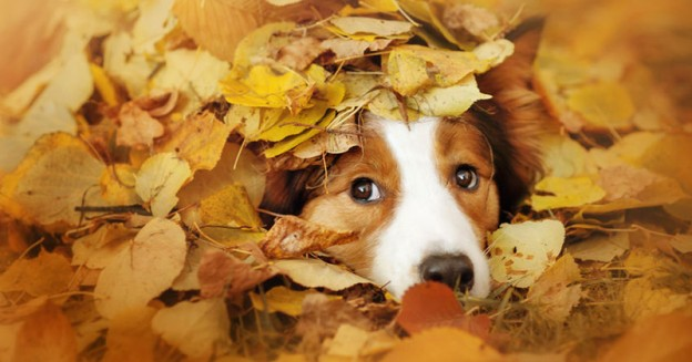 Dog Autumn Bucket List