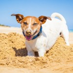 Dog Beaches for First Timers