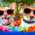 Where is the Most Dog Friendly Place to go on Holiday?