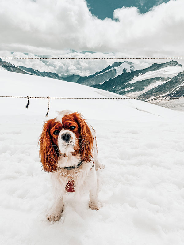 Dog Friendly Holiday in Switzerland