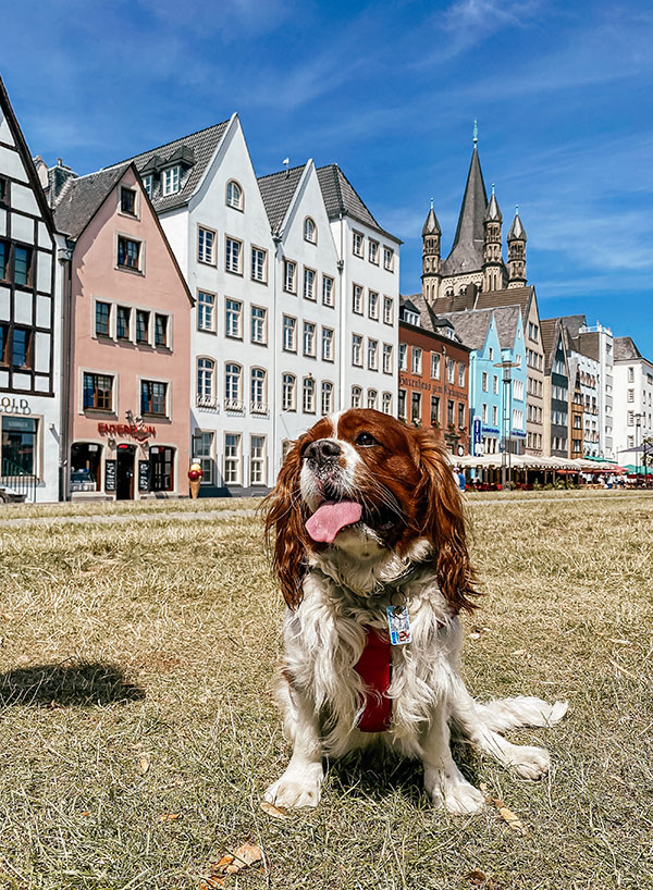 Dog Friendly Holiday in Germany