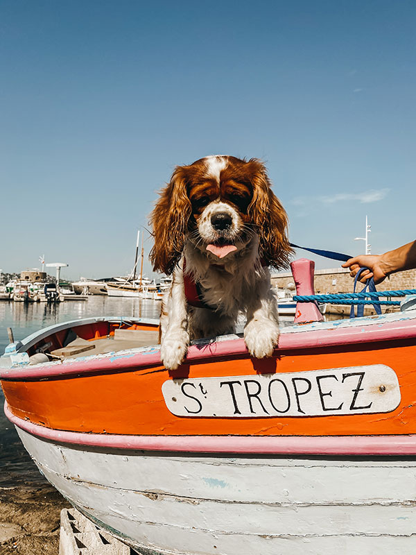 Dog Friendly Holiday in France