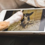 9 Dogs You Should be Following on Instagram