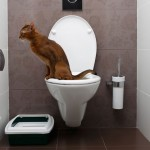 Can You Flush Cat Poo or Litter Down the Toilet?
