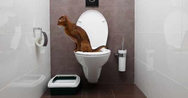 Can You Flush Cat Poo or Litter Down Toilet