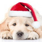 What to Consider Before Getting a Dog this Christmas