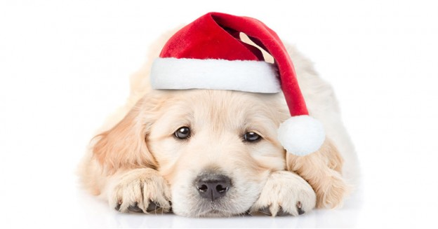 Getting a Dog For Christmas