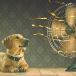 9 Essential Tips to Keep Your Pet Cool on Hot Days